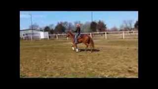 SOLD - Glo - Head/Heel/Calf/Sorting/Ranch - Barrels & Poles! 903-880-2720