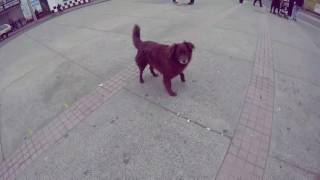 Perros Callejeros Valparaíso #6 l La Huea de perro