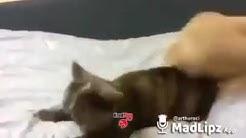 Porno xxl de chat et chate
