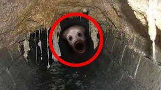 🔴 As 5 Criaturas mais BIZARRAS Capturadas em Vídeo!