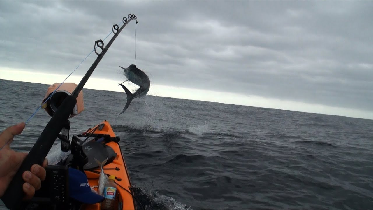 100kg marlin 100kg shark from kayak extreme fishing for Youtube kayak fishing