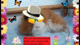 Kultur am Nachmittag - Lass Herrn Zottel (Meerschweinchen) sprechen (6) German + English subtitles