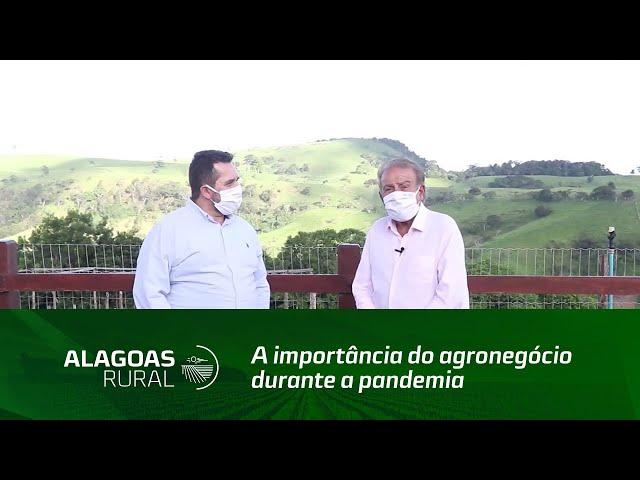 A importância do agronegócio durante a pandemia