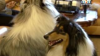 Изделия из собачьей шерсти согреют в морозы