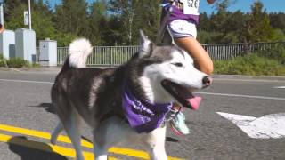 On Saturday, May 7th, over 1000 people came together for some Husky...