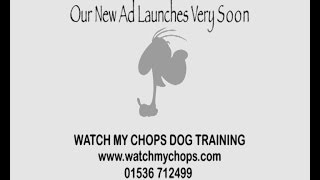 Teaser Commercial - Dog Training Across Northamptonshire