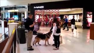 Полицейская собака К-9 в торговом центре в Майами