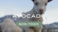 What is a Non Toxic Mattress? — Avocado Green Mattress®