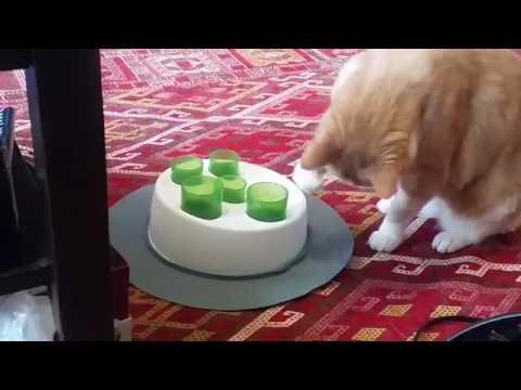 Ginger cat Catit Senses 2.0 Digger