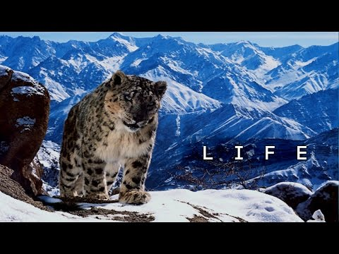 What Is Life - Inspirational Video