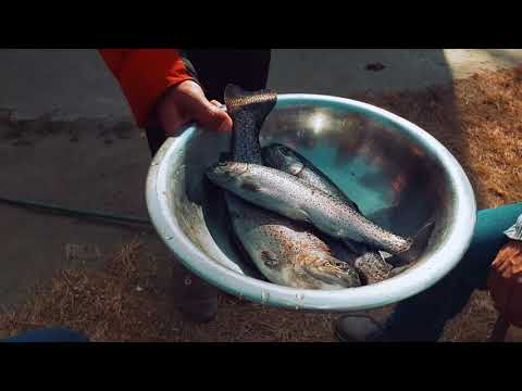 Fresh and Delicious Rainbow Trout Fish Fired and Curry| Budhanilkantha| Kathmandu| Nepal|25 Jan 2021