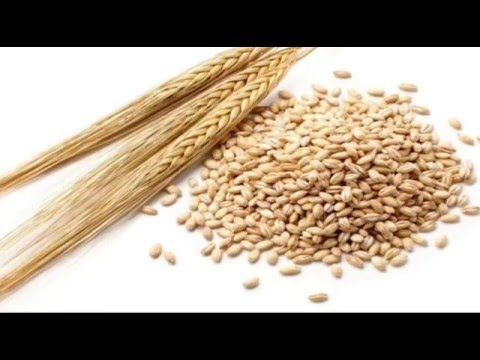 जौ-के-फ़ायदे-|-health-benefits-of-barley(jau),-barley-for-weight-loss,-beauty-benefits-of-barley