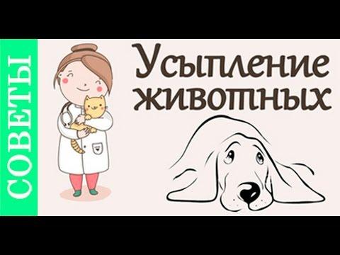 Как самому усыпить собаку в домашних условиях навсегда