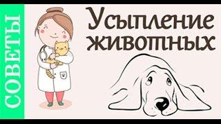 Усыпление животных. Советы ветеринара