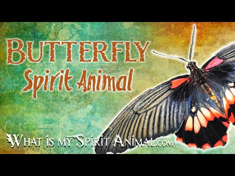butterfly-spirit-animal-butterfly-totem-&-power-animal-|-butterfly-symbolism-&-meanings