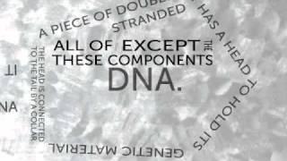 t4 phage virus typography
