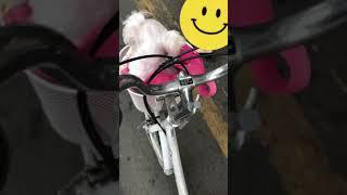 자전거 바구니에 들어간 강아지