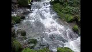 Cataract Falls Trail, Marin County, California 18march2012