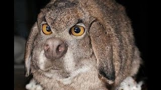 Клетки для кроликов по методу Золотухина Н .И .от  Ярослава (Видео 1) Сages for rabbits.(Клетки своими руками.Для того чтобы кролики хорошо развивались им нужно создавать благоприятные условия..., 2013-07-20T12:53:18.000Z)