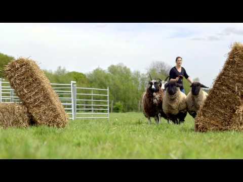 Flockstars starts | ITV