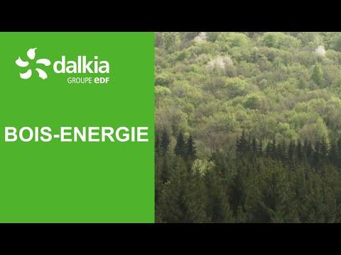 Quel est le parcours du bois-énergie ? | BRUT x Dalkia
