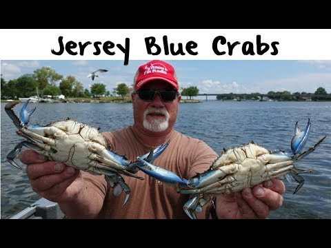 Northern New Jersey Blue Crab Fishing