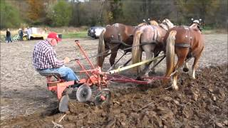 2015 Draft Horse & Mule Plow Day (full)