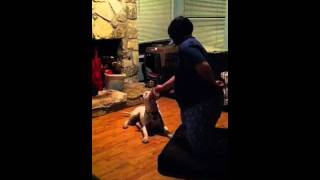 Schatzi And Her Tricks - Texas American Bulldog Rescue