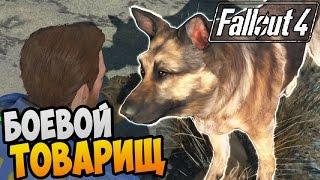 Fallout 4 Прохождение  БОЕВОЙ ТОВАРИЩ 02