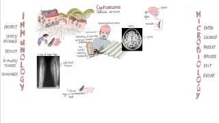 helminthiasis betegség megelőzése)