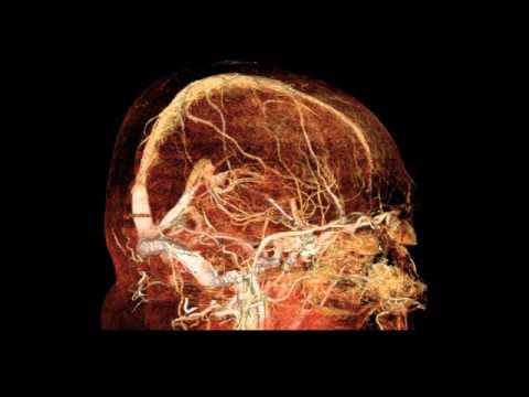Оболочки головного могза