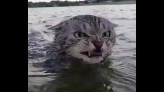 Водяной кот. Видели видео? Фрагмент выпуска от 13.10.2019
