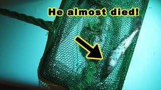 My fish went missing for 6 months in a death trap and was later found alive and well. thumbnail