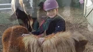 Alle Pferde reiten an einem Tag!?