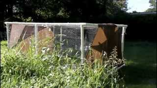 Portable Pvc Chicken Coop With Cool-a-roo Sail Shades And Amaranth Garden