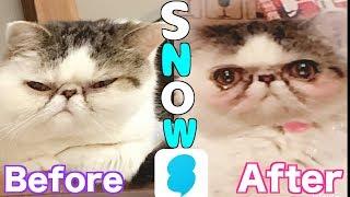 【検証】猫はSNOWでどこまで可愛くなるのか?