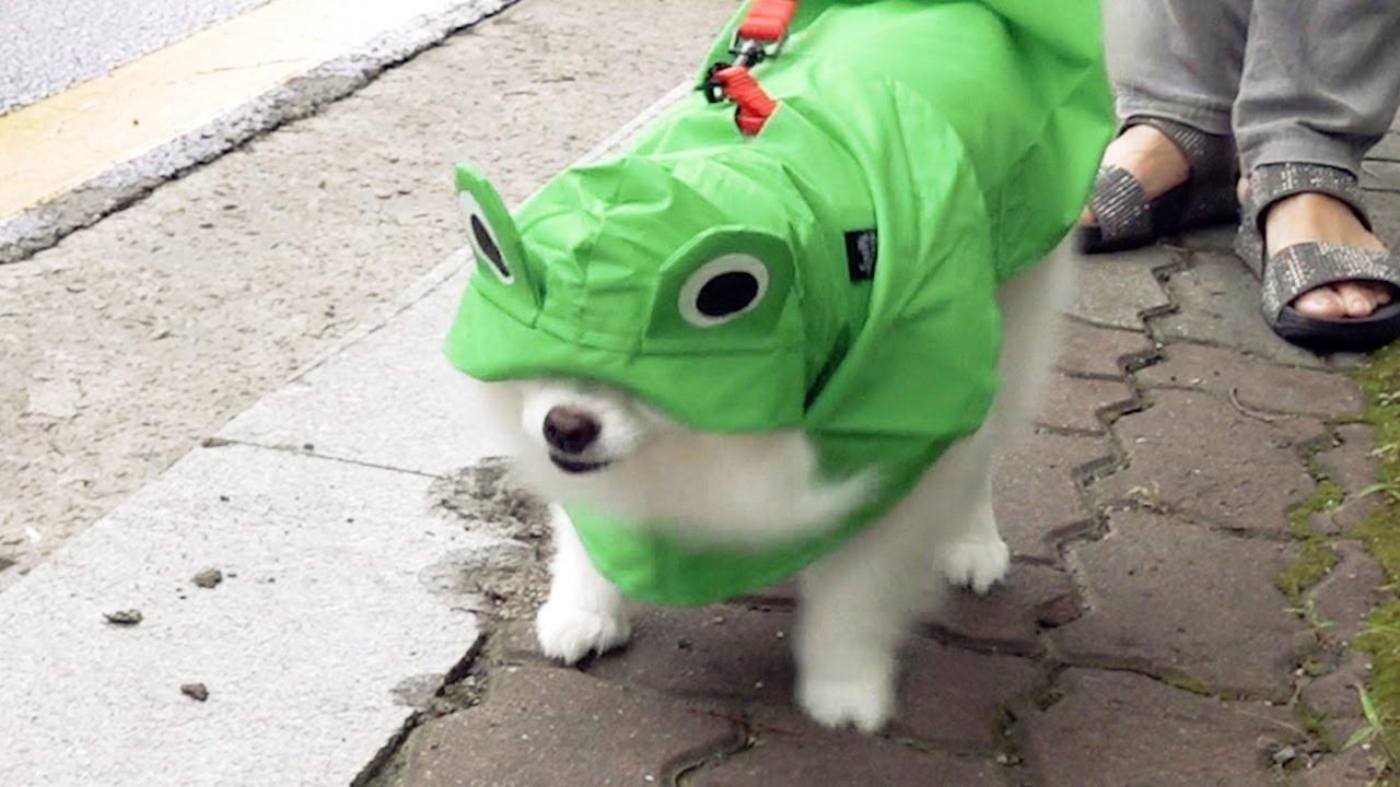 비가 너무와서 개구리가 된 강아지ㅋㅋㅋ
