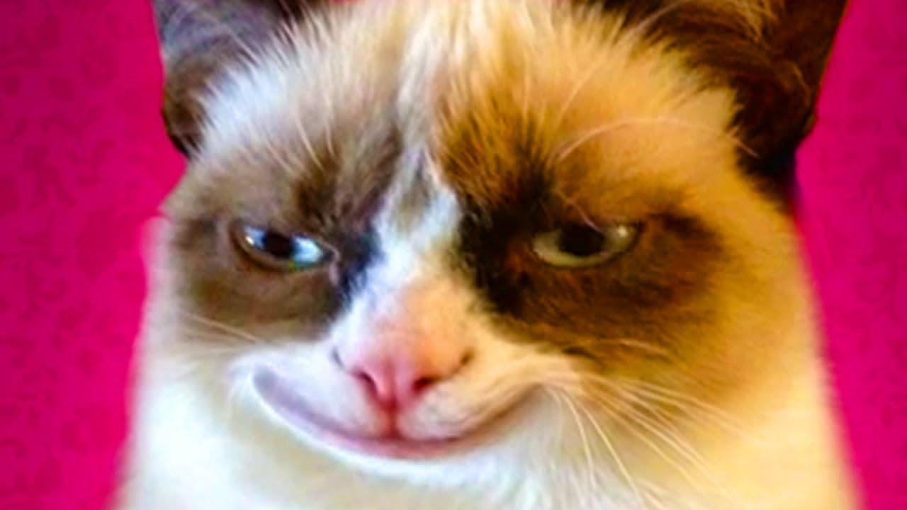 Cat Smiles Funny