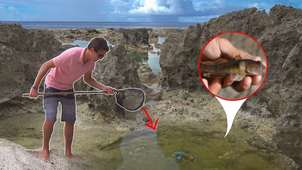 saving-goby-fish-with-homemade-fish-net
