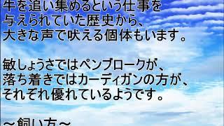 人気 ワンちゃん グレートピレニーズ https://youtu.be/pMX_H-Y7cF4 ◇人...