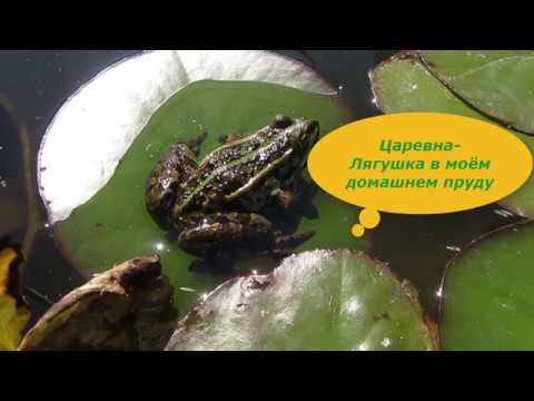 Лягушки в домашнем пруду. Польза жаб и лягушек для сада