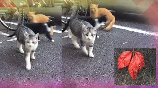 The kittens' everyday life came back. Three again worked on the adv...