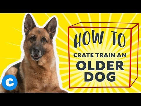 How To Crate Train An Older Dog