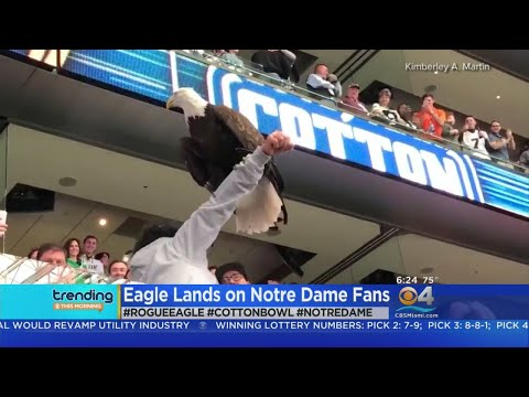 Trending: Cotton Bowl Eagle