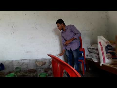8792760107 Rabbit farming in Mysore and Karanataka, Rabbit meat supplier, Rabbit farming marketing ,