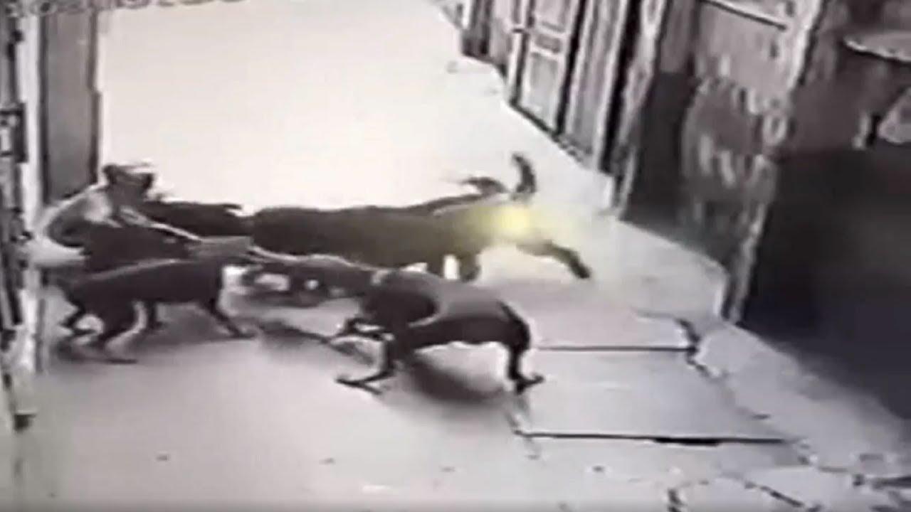 Resultado de imagen para imagenes ataque de un perro