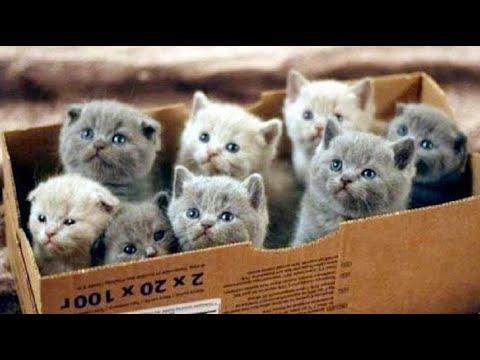Смешные кошки приколы за 5 января