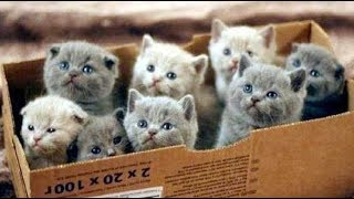 Смешные кошки приколы про кошек и котов 2018 (ОЖИДАНИЕ И РЕАЛЬНОСТЬ 2)