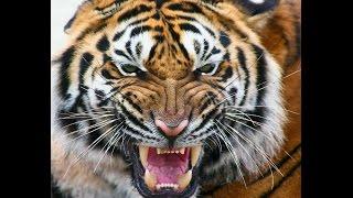 HR.L'ONE - Тигр (премьера клипа, 2016)