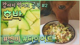강아지 호박 먹어도?|변비, 설사, 다이어트에 좋은 반…